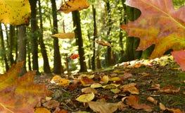 Hojas de otoño que caen Foto de archivo