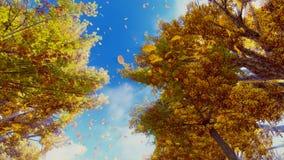 Hojas de otoño que caen de la cámara lenta de los árboles almacen de video