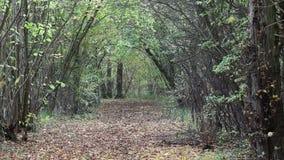 Hojas de otoño que caen de los árboles en el viento metrajes