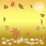 Hojas de otoño que caen en el agua en la salida del sol Imagen de archivo libre de regalías