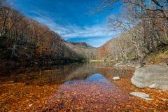 Hojas de otoño que caen en el lago Naganuma Imagenes de archivo