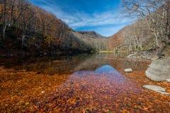 Hojas de otoño que caen en el lago Naganuma Fotos de archivo