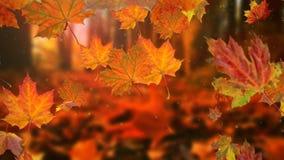 Hojas de otoño que caen en la cámara lenta y sol que brilla a través de las hojas de la caída almacen de metraje de vídeo