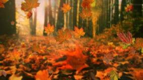 Hojas de otoño que caen en la cámara lenta y sol que brilla a través de las hojas de la caída almacen de video
