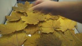 Hojas de otoño que caen en la cámara lenta y sol que brilla a través de las hojas de la caída Fondo hermoso del paisaje almacen de video