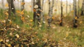 Hojas de otoño que caen en la cámara lenta y sol que brilla a través de los árboles en el fondo hermoso del paisaje del bosque almacen de metraje de vídeo
