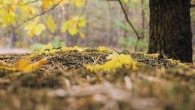 Hojas de otoño que caen en parque otoñal Cámara lenta almacen de metraje de vídeo