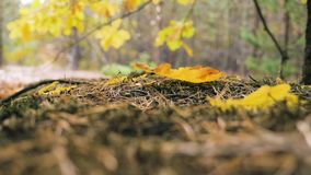 Hojas de otoño que caen en parque otoñal Caída Cámara lenta almacen de video