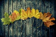 Hojas de otoño que cambian color Fotografía de archivo libre de regalías