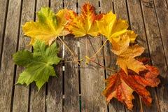 Hojas de otoño que cambian color Imagen de archivo libre de regalías