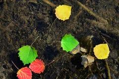 Hojas de otoño que flotan en el agua Fotografía de archivo