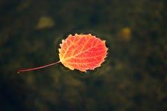 Hojas de otoño que flotan en el agua Imagenes de archivo