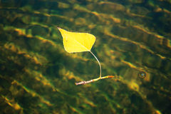 Hojas de otoño que flotan en el agua Imagen de archivo libre de regalías