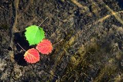 Hojas de otoño que flotan en el agua Fotografía de archivo libre de regalías