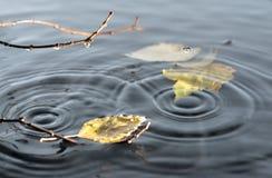 Hojas de otoño que flotan en la superficie del agua Foto de archivo