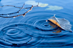 Hojas de otoño que flotan en la superficie del agua Fotografía de archivo