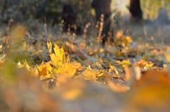 Hojas de otoño que mienten en tiempo soleado Fotos de archivo