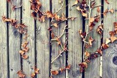 Hojas de otoño que suben una cerca de madera imagenes de archivo