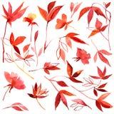 Hojas de otoño rojas de la acuarela y anaranjadas pintadas a mano Fotografía de archivo libre de regalías