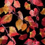 Hojas de otoño rojas, fondo negro Modelo inconsútil del otoño del contraste watercolor Fotografía de archivo libre de regalías
