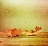 Hojas de otoño secadas que mienten en el fondo Fotos de archivo libres de regalías