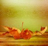 Hojas de otoño secadas que mienten en el fondo Foto de archivo