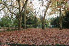 Hojas de otoño secas Fotografía de archivo