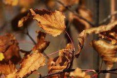 Hojas de otoño secas en el sol fotos de archivo libres de regalías