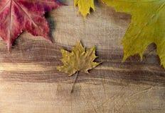 Hojas de otoño sobre fondo de madera Imágenes de archivo libres de regalías