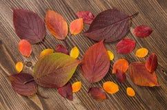 Hojas de otoño sobre fondo de madera Fotografía de archivo libre de regalías