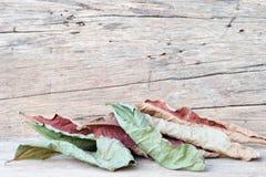 Hojas de otoño sobre fondo de madera Fotos de archivo libres de regalías