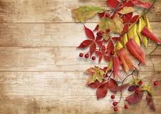 Hojas de otoño sobre fondo de madera Con el espacio de la copia Imagen de archivo libre de regalías