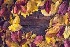 Hojas de otoño sobre fondo de madera foto de archivo libre de regalías