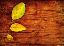 Hojas de otoño sobre la madera Fotografía de archivo