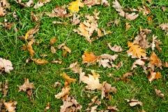 Hojas de otoño sobre la tierra Fotos de archivo libres de regalías