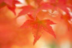 Hojas de otoño suaves soñadoras borrosas del foco, Imagenes de archivo