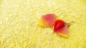 Hojas de otoño varicolored del arce en el fondo de madera imagenes de archivo