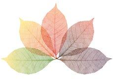 Hojas de otoño, vector Foto de archivo