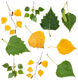 Hojas de otoño verdes y amarillas del árbol de abedul Fotografía de archivo