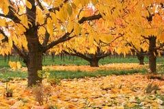 Hojas de otoño vibrantes Fotos de archivo libres de regalías
