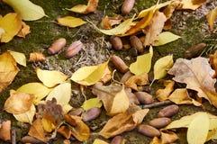 Hojas de otoño y bellotas en la tierra fotografía de archivo