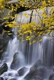 Hojas de otoño y cascada Imágenes de archivo libres de regalías