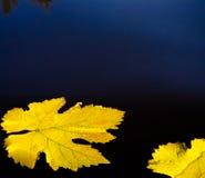 Hojas de otoño y fondo abstracto del agua imágenes de archivo libres de regalías