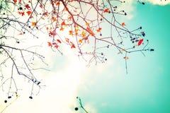 Hojas de otoño y fondo hermosos del cielo en temporada de otoño Imagen de archivo