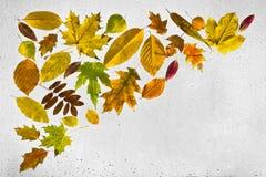 Hojas de otoño y gotas de agua coloridas en la ventana Fotos de archivo