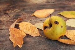 Hojas de otoño y manzana putrefacta Foto de archivo libre de regalías