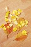 Hojas de otoño y pétalos color de rosa en suelo Imágenes de archivo libres de regalías