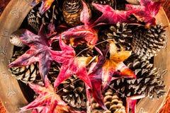 Hojas de otoño y pinecones Foto de archivo libre de regalías