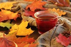 Hojas de otoño y taza de té Fotografía de archivo