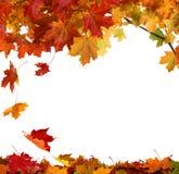 Hojas de otoño aisladas en el fondo blanco Imágenes de archivo libres de regalías